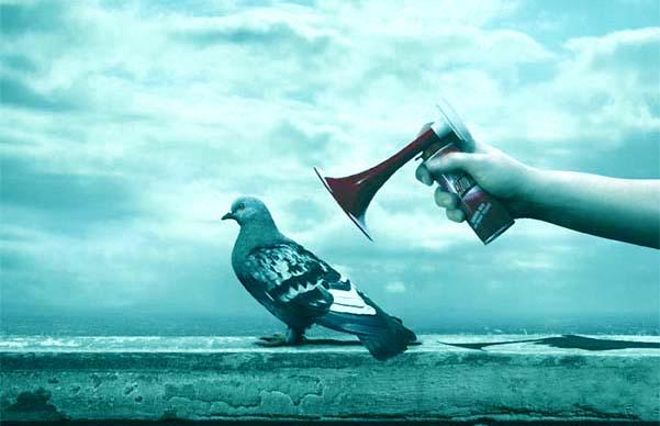 piccione teatrale azzurro