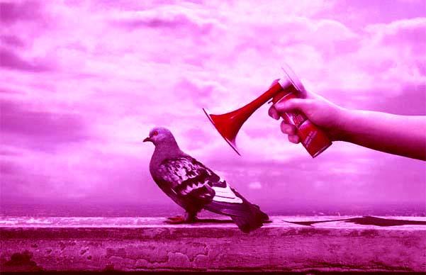 piccione teatrale fucsia